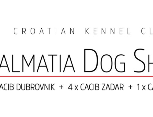 Dalmatian Dog Shows Zadar